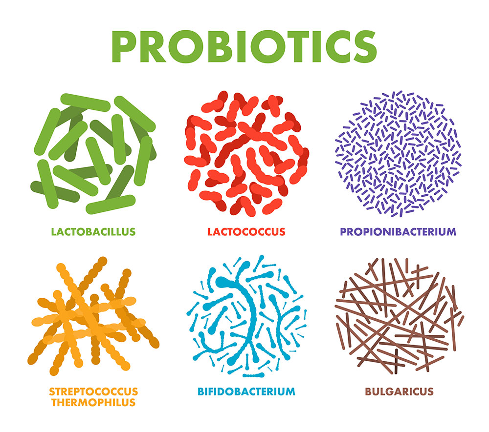 types of probiotic bacteria